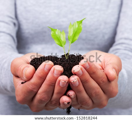 Woman hands with green plant. Growth concept background. - stock photo