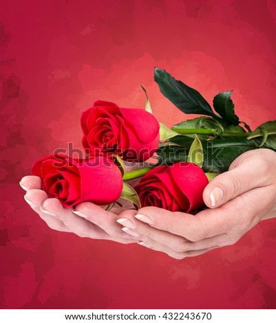 Woman hands with red roses.