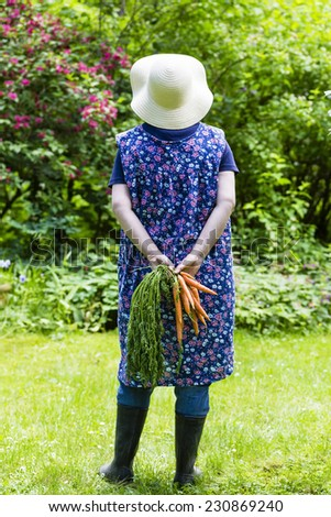Woman harvesting carrots in a garden - stock photo