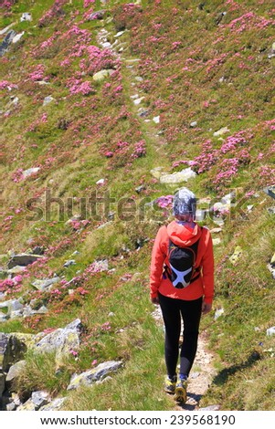 Woman hiker advancing on the mountain trail amongst red rhododendron bushes - stock photo