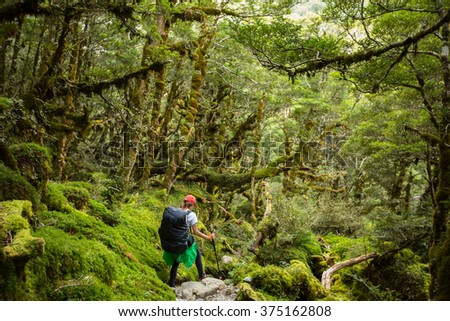 woman hiker with backpack walking in native beech forest on Routeburn Track, New Zealand