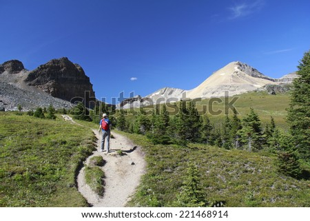 Woman Hiking Along the Tree Line on an Alpine Trail in Summer - Jasper National Park, Canada  - stock photo