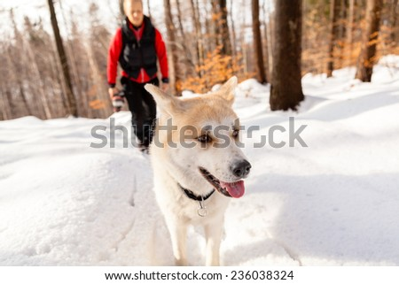Woman hiking with akita dog on white snow, forest in winter mountains with woman in the background. Travel together with animal pet friend - stock photo
