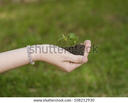 Woman holding a small plant - stock photo
