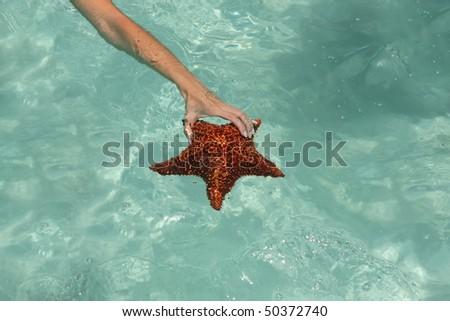 Woman holding a starfish in saona beach - stock photo