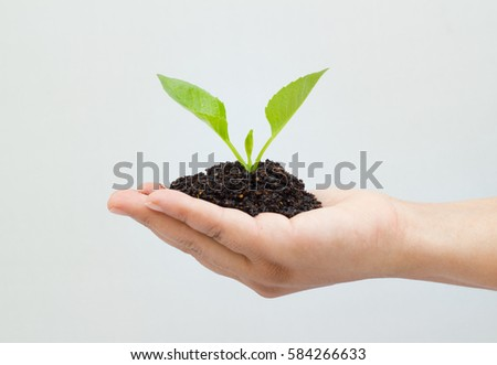 Woman holding a young plant seedling in soil.