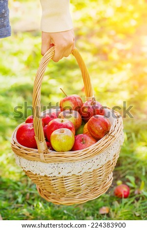 Woman holding basket full of apples - stock photo