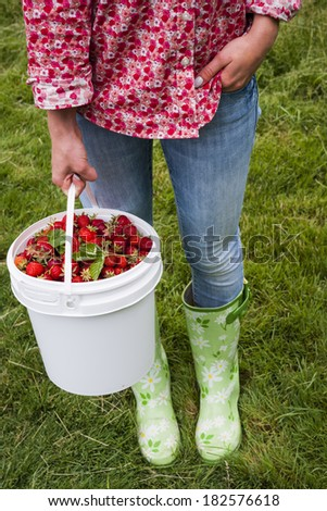 Woman holding bucket of freshly picked strawberries on green grass outside in garden - stock photo