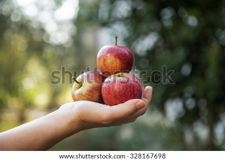 Woman holding bunch of red apples in her hand in the garden - stock photo