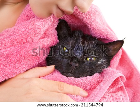 Woman holding Cute black soggy cat after a bath, drying off with a pink towel - stock photo