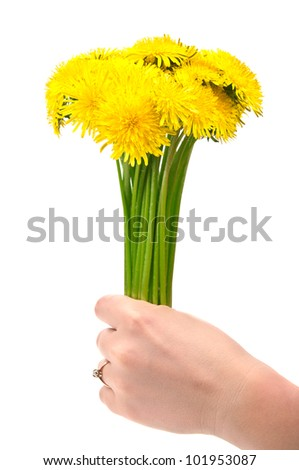 woman holding dandelion flowers isolated on a white background