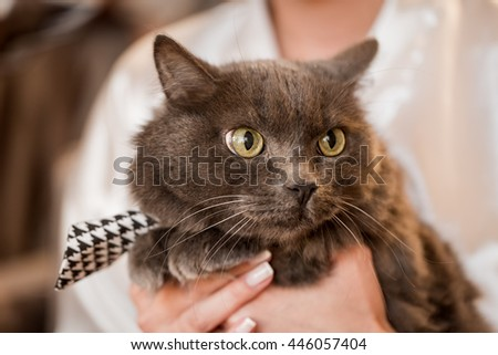 Woman holding her pet cat. - stock photo