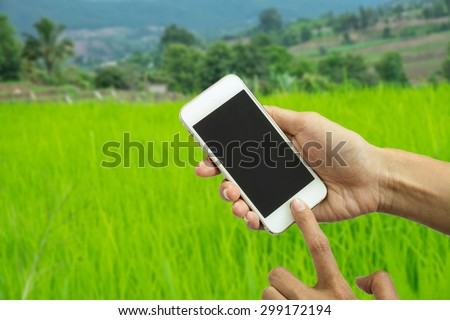 Woman holding smartphone against Rice field or mobile phone with blank mobile.Shallow depth of field. - stock photo