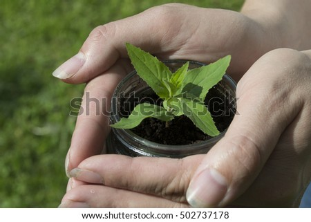 woman holds a green sprout in the pot