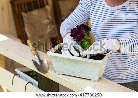 Woman in gardening gloves planting surfinia plant on the terrace of her summer house - stock photo