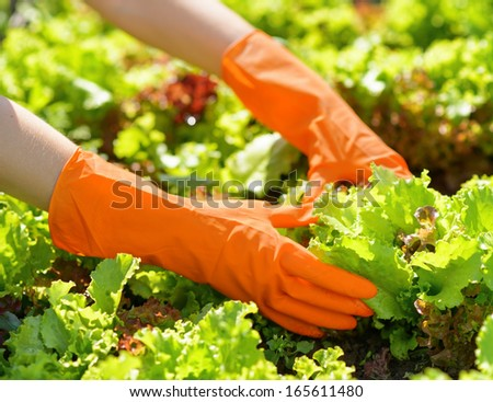 Woman in orange gloves working in the garden. - stock photo