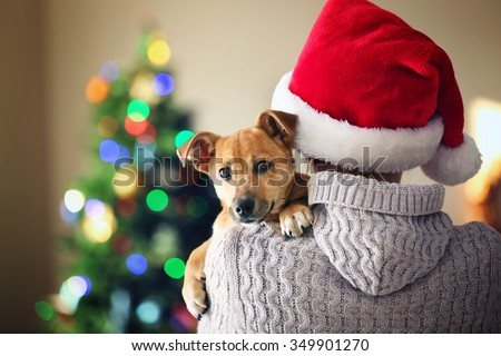 Woman in Santa hat holding at shoulder small funny cute dog on Christmas background - stock photo