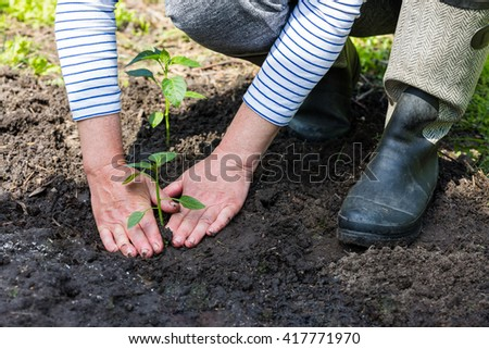 Woman in the garden working with seedlings - stock photo