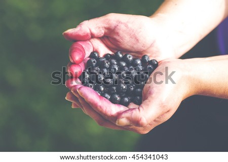 Woman is holding freshly picked blueberries in her hands. The image has a vintage effect applied.