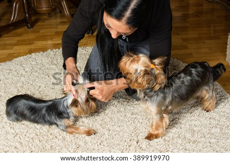 Woman Knotted By Different Breeds Of Dogs Video