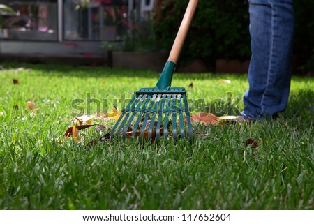 Woman is raking leaves on lawn in her back yard  - stock photo