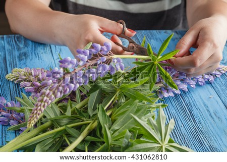 Woman make wild lupine flowers bouquet