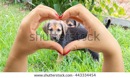 woman making the heart shape with her hands and the puppy dog in the middle - stock photo