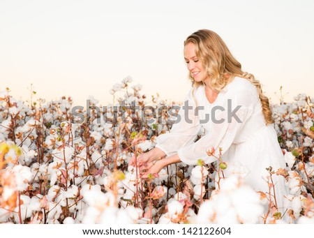 Woman Picking a Cotton Boll from a Field of Cotton - stock photo