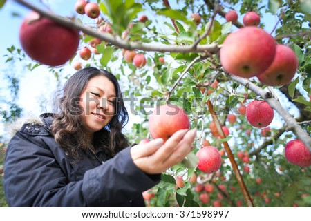 Woman picking apples from an apple tree in the garden on a lovely sunny summer day