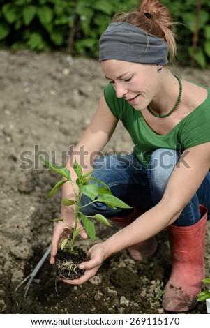 Woman planting a plant sapling - stock photo