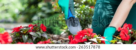 Woman planting flowers in a garden, panoramic - stock photo