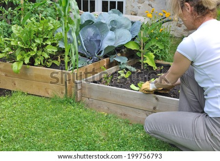 woman planting salad in a small vegetable patch