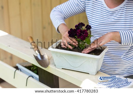 Woman planting surfinia/petunia plants into flowerpot