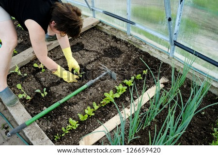 Woman planting young seedlings - stock photo