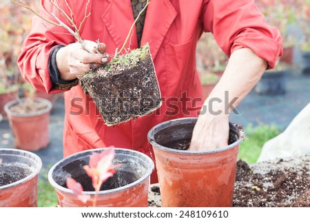 woman planting young tree into a pot - stock photo