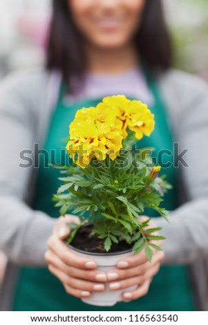 Woman presenting a yellow flower and holding it out - stock photo