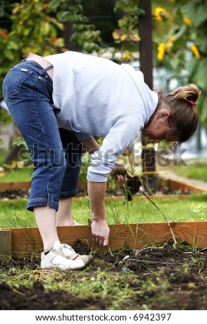 Woman pulling the weeds out of the ground