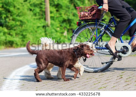 woman riding a bike with two dogs at the leash