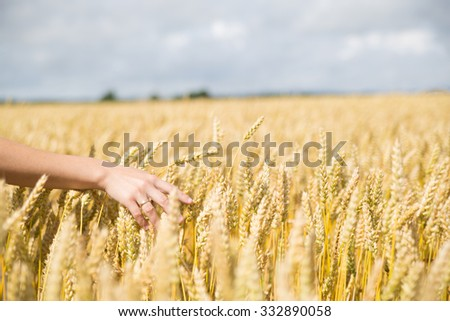 Woman's arm in yellow wheat field in summer. - stock photo