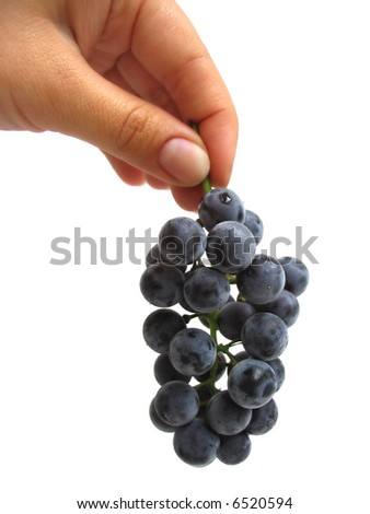 Woman's hand holding a bunch of dark grapes on white background