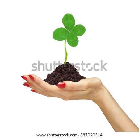 woman's hand holding a clover plant growing out of the ground, on white - stock photo