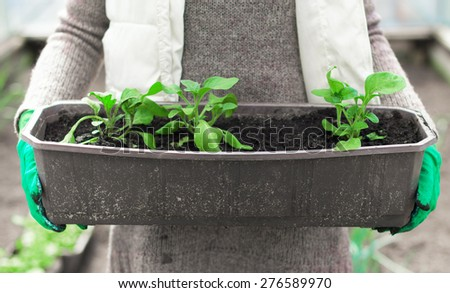 Woman's hand holding container with seedlings. - stock photo