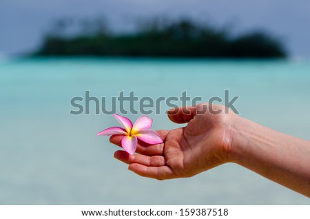 Woman's hand holds Frangipani (Plumeria rubra), also known as the Hawaiian Lei flower over turquoise water with Tropical pacific island in the background.  - stock photo