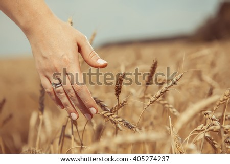 Woman's hand is touching a wheat. Rural background.