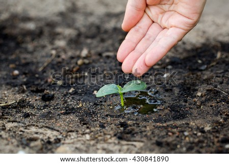Woman's hand watering the soil of young plant.