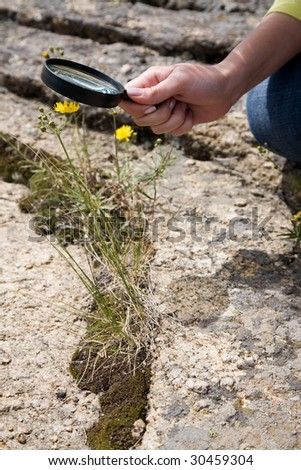 woman's hand with magnifier above small flower