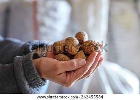Woman's hands holding a handful of walnuts, closeup - stock photo