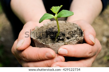 woman's hands holding a plant growing out of the ground, closeup.Green seedling growing from soil  outdoors,Ecology concept., World Environment Day, Earth Day, World food day concept.Hope, New Life  - stock photo
