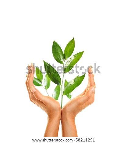 woman's hands holding green leaf
