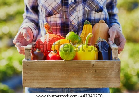 Woman's hands holding wooden crate with fresh organic vegetables from farm
